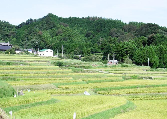 棚田市役所トップ_s